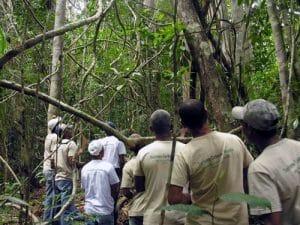 Grupo de voluntários do projeto Messias da Vida entre árvores da Mata Atlântica